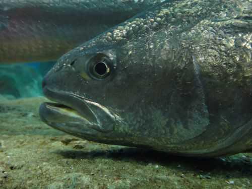 рыбья чешуя и слизь: что добавляют в косметику на самом деле